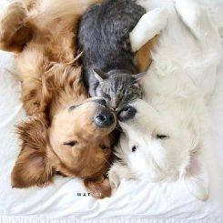 Các loại thú cưng